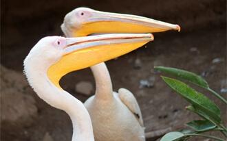 גן החיות סנטרל פארק - Central Park Zoo